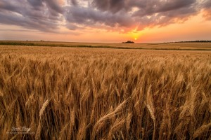 http://www.scottbeanphoto.com/blog/2013/08/05/photographing-kansas-wheat-fields/