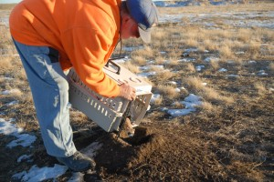 Larry releases a Black-footed Ferret onto his property in 2007