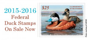 2015-2016-Federal-Duck-Stamps-On-Sale-Now